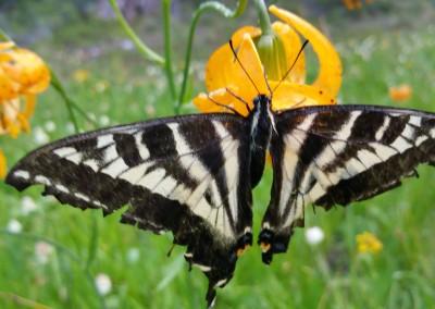Southern Oregon Wildflowers - Member Photos