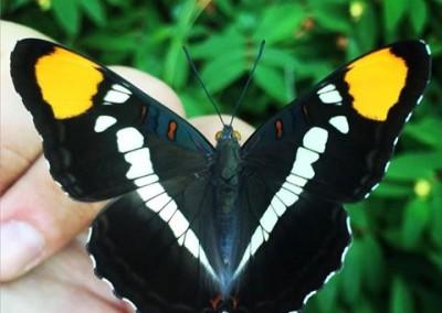 Butterflies-Oregon