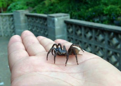 Spiders-Oregon