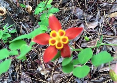 flowers-forest-Oregon